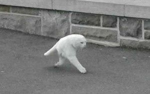 google-street-view-cat2-300x187